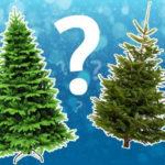 Как правильно выбрать елку на Новый год?