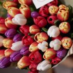 Сколько тюльпанов подарить на 8 Марта